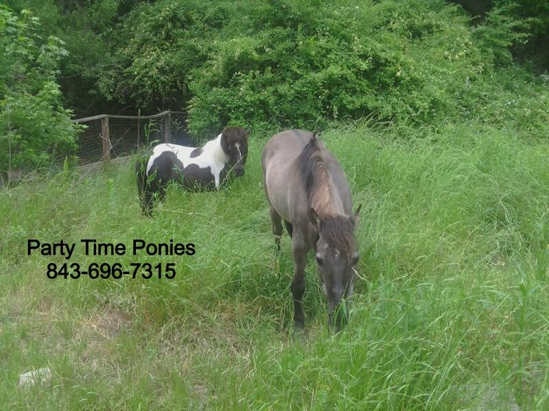 Party Time Ponies - Pony Rides - Charleston, SC