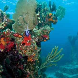 Underwater shot of colorful coral reef with a submerged statue in background