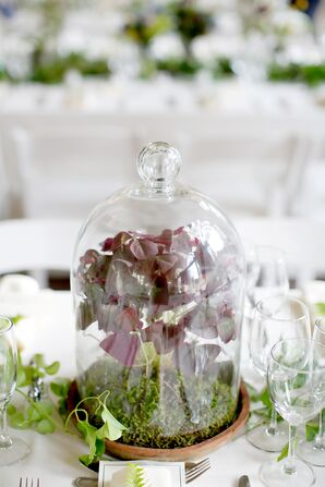 Herb Arrangements in Glass Terrariums