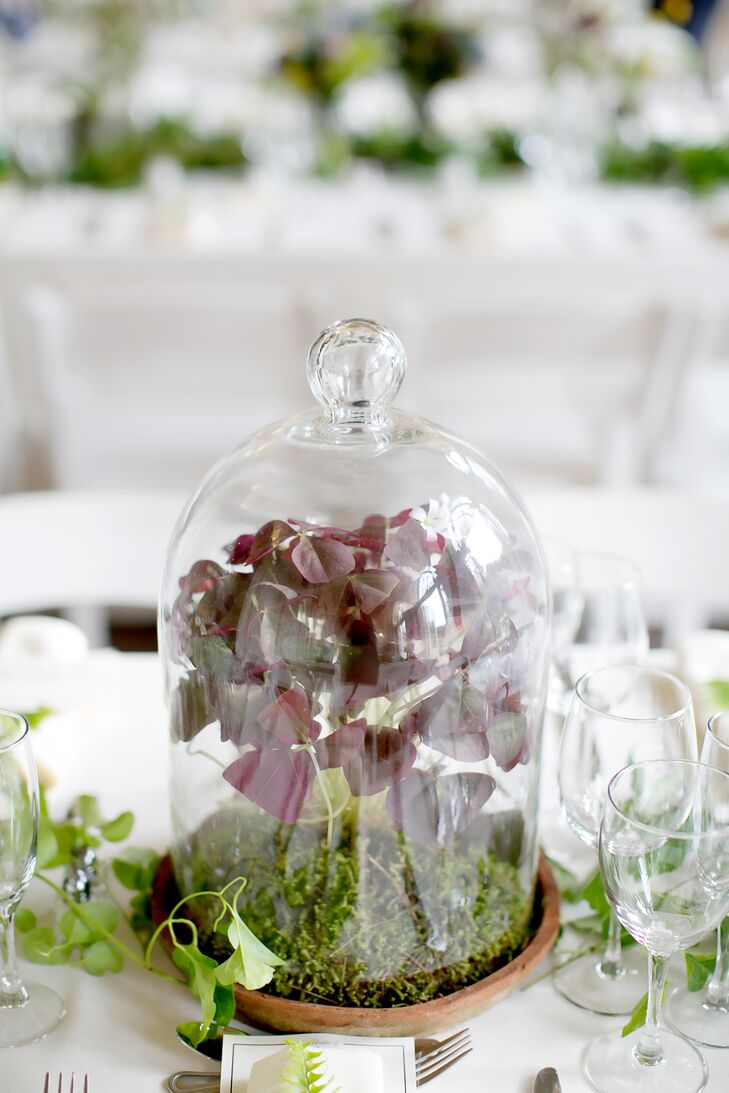 Herb Arrangements in Glass Terrariums