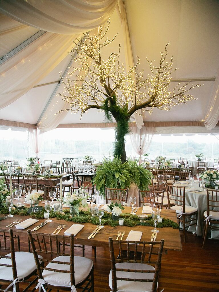 Large tree with string lights on branches inside white wedding tent