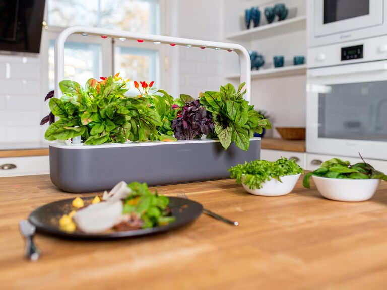 Gray and white indoor smart garden on table with lots of greens