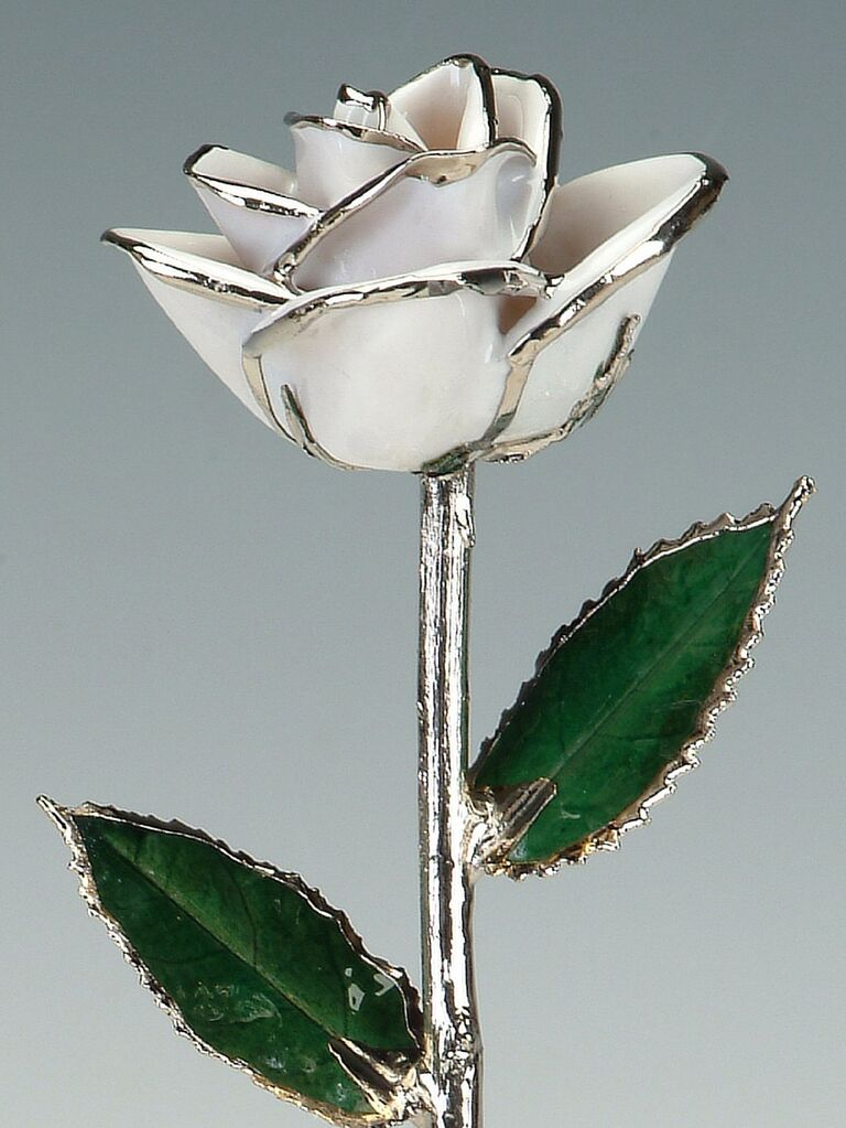 White rose preserved in lacquer with platinum trim