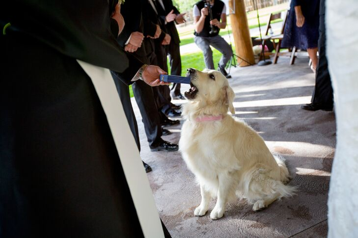The couple's golden retriever, Dublin, carried the rings down the aisle in an old box in his mouth.