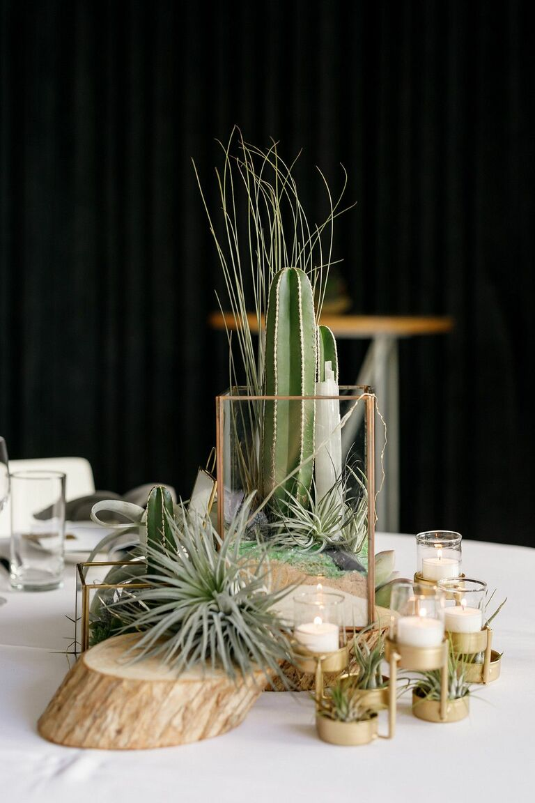Centerpiece with cacti and air plants