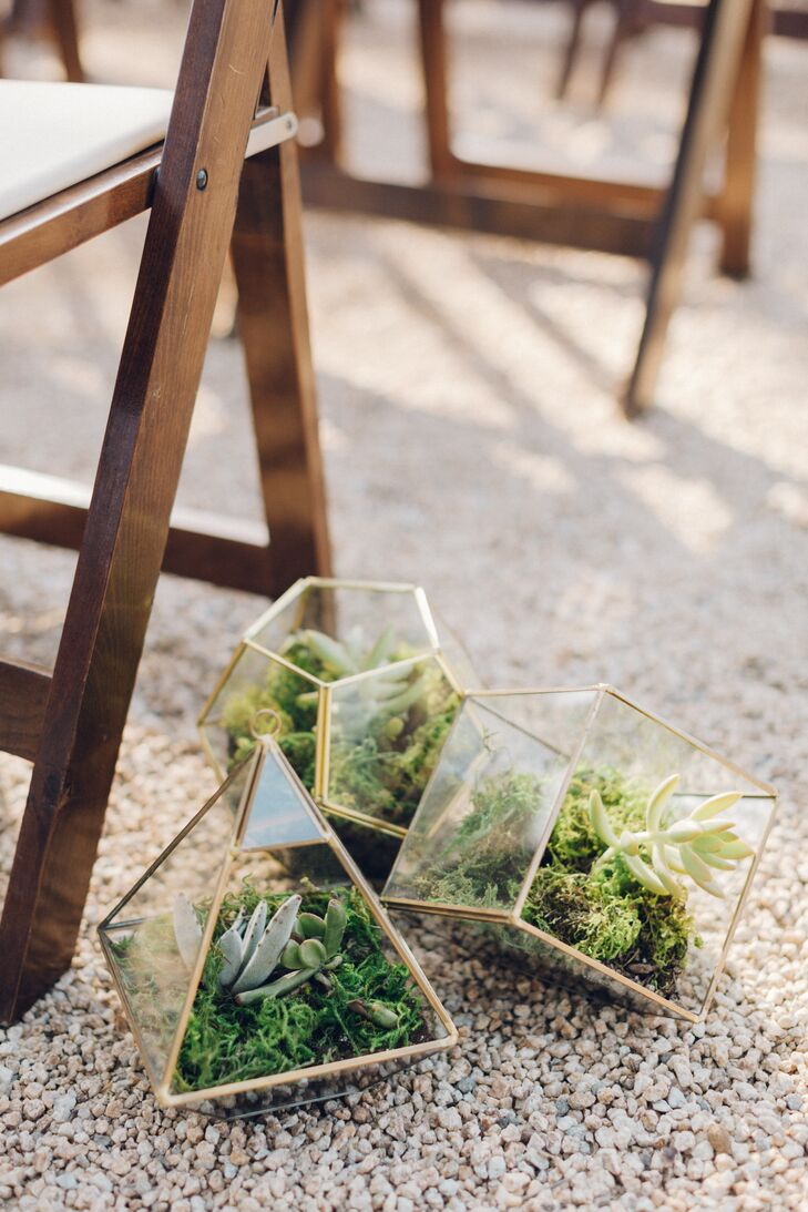 Succulents and Moss in Geometric Terrarium Vessels