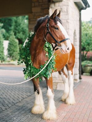 Clydesdale Horse outside Reception