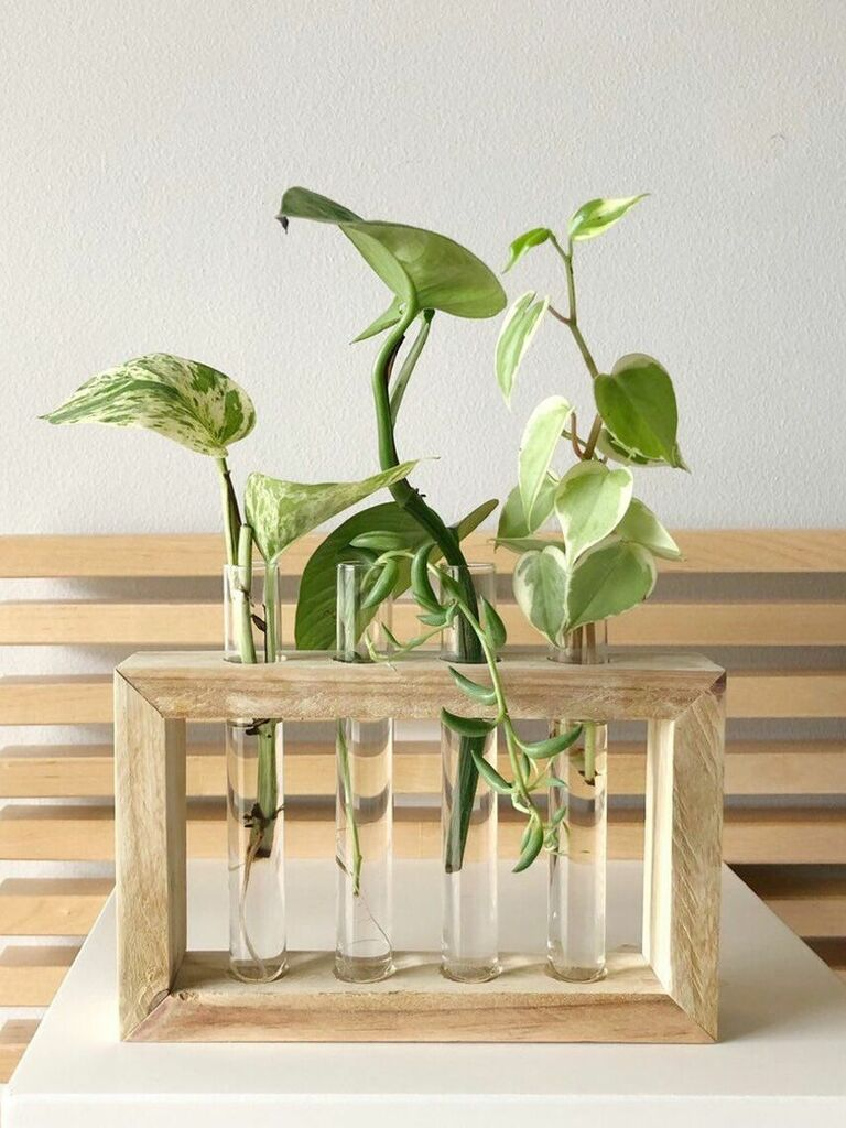 propagation station plant gift for husband