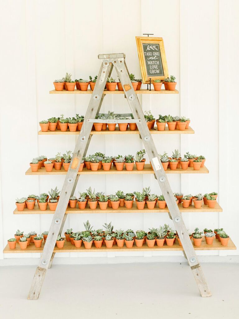 Tiered shelves with succulent wedding favors