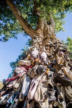 Shoe Tree Ceremony Backdrop in Wetmore