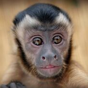 American Canyon, CA Animals For Parties | Wild About Monkeys!