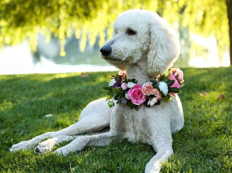 Flower collar dog wedding attire