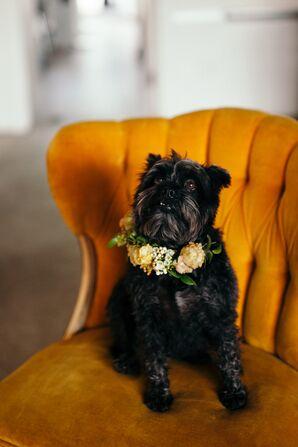 Dog as Ring Bearer in Flower Collar