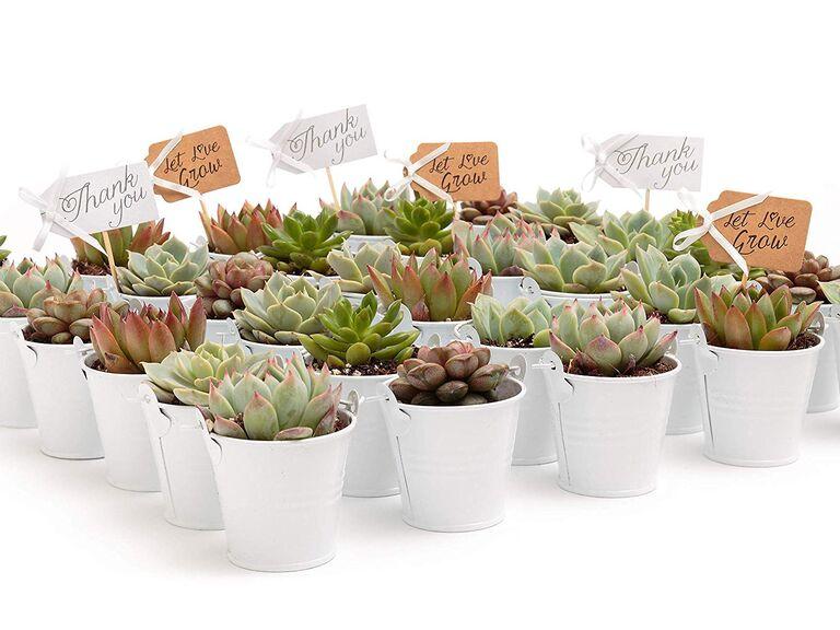 Succulents unique wedding favors