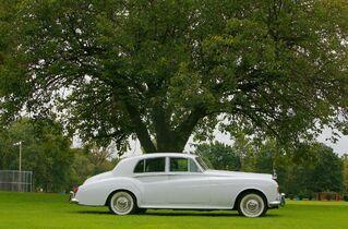 Mint Life Limousine