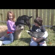 Augusta, KS Petting Zoo | Four Points Ranch & Petting Zoo