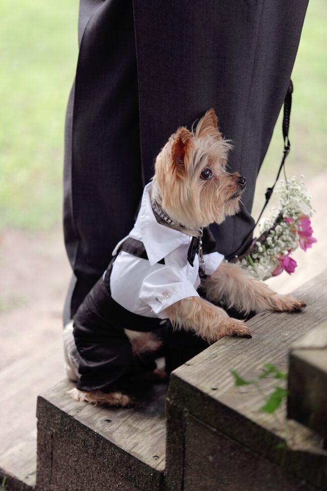 Yorkie Wedding Dog Formal Suit