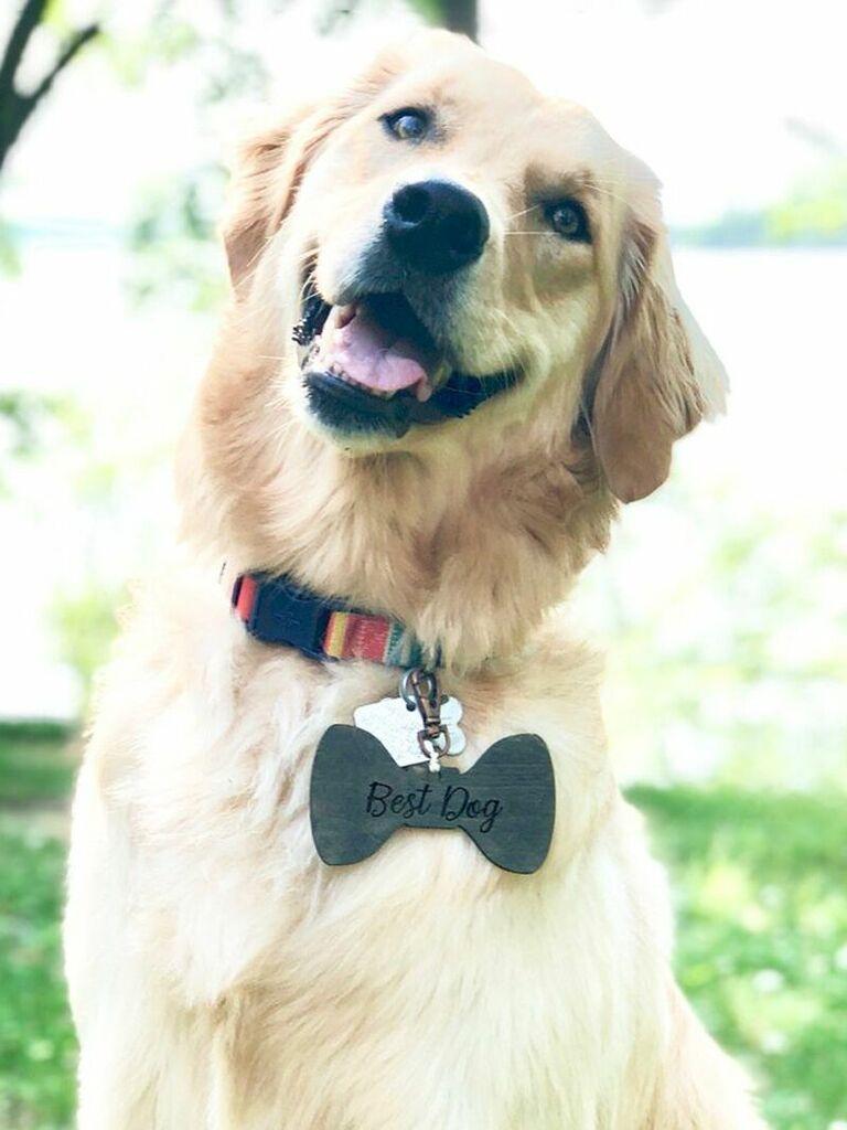 Best Dog tag for wedding collar