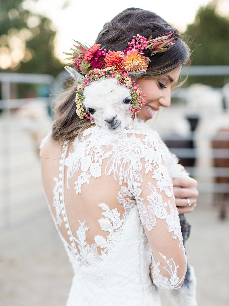 wedding alpaca farm outdoor rustic