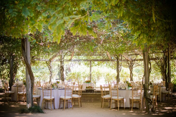 The couple and their guests dined under a beautifully draped canopy of grapevines for the reception.
