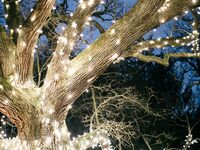 Romantic wedding string lights wrapped around tree