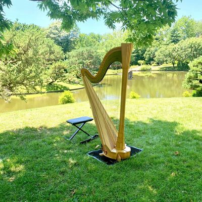 Harp by Colleen