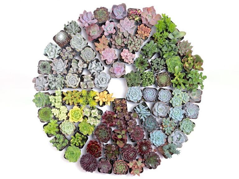 Assorted succulents set 20th anniversary gift