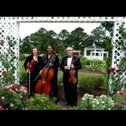 Newport News, VA String Quartet | Arte Musicale String Ensemble