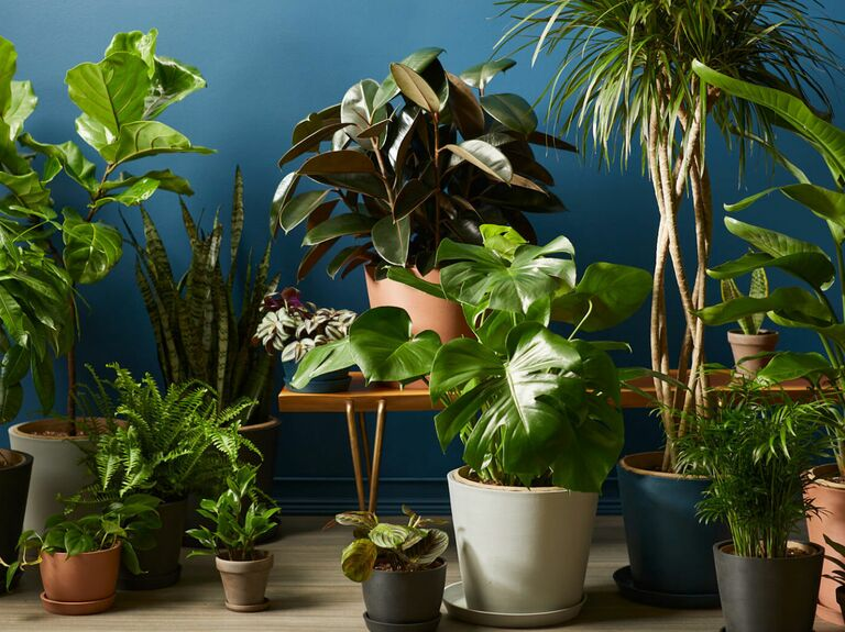 potted plants in lots of different sizes