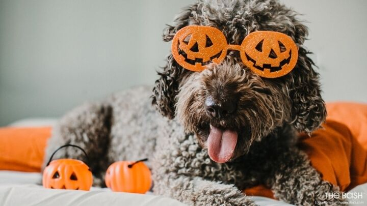 Funny Halloween Zoom Background - Dog With Glasses