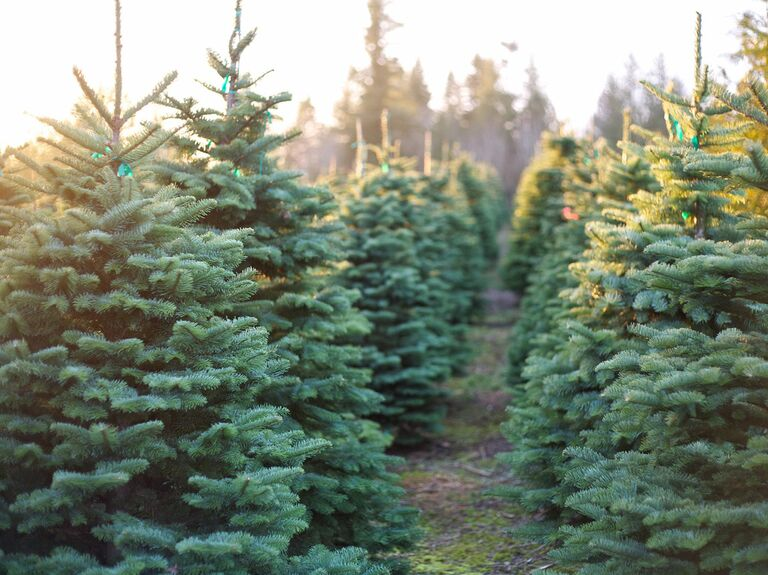 Christmas Tree Farms Where You Can Actually Get Married. ' - 10 Christmas Tree Farms Where You Can Actually Get Married