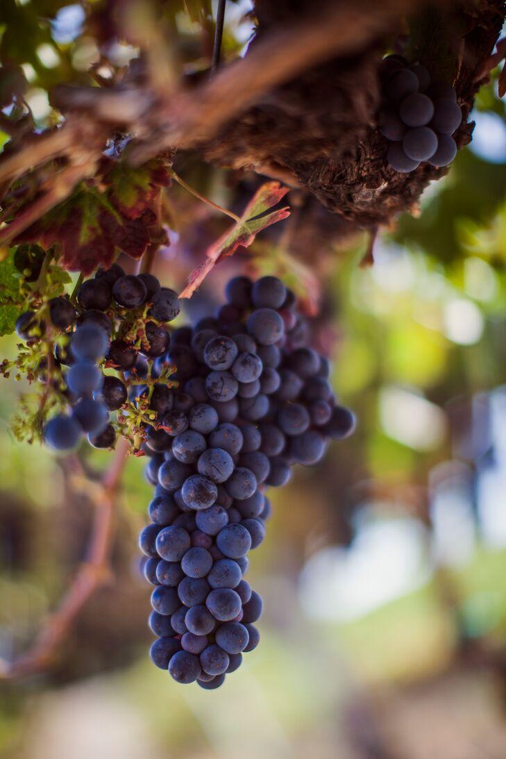 Grapes at HammerSky Vineyard