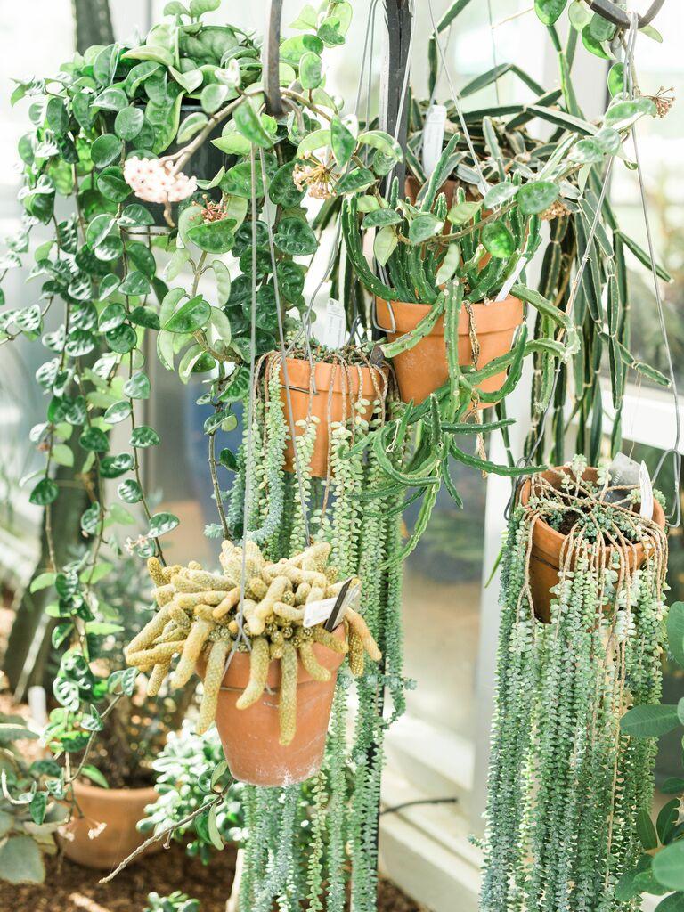 closeup of hanging plants succulents cactus in macrame holders