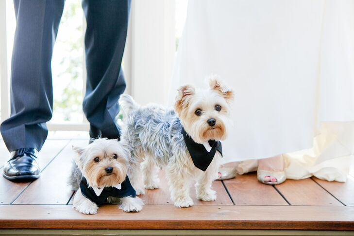 The couple's puppies, Wrigley and Rupp, wore puppy tuxedos for the wedding celebration!