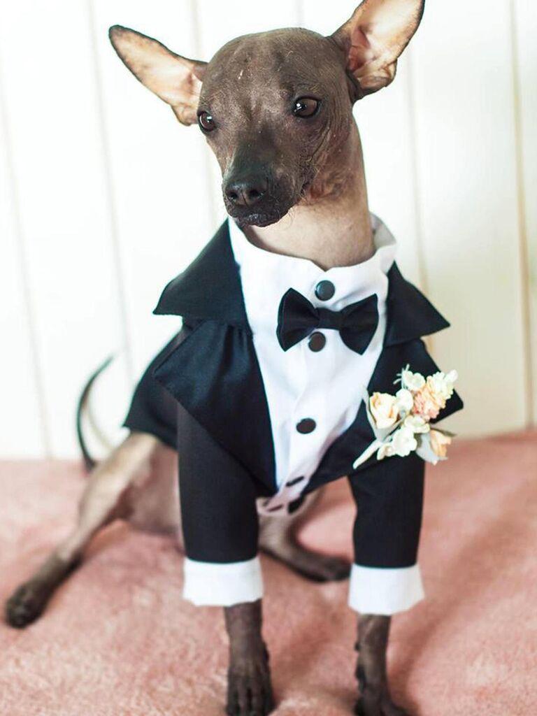 Long sleeve dog tuxedo