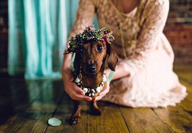 Puppy wedding at Maas Building in Philadelphia