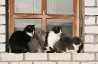 cats_in_a_window