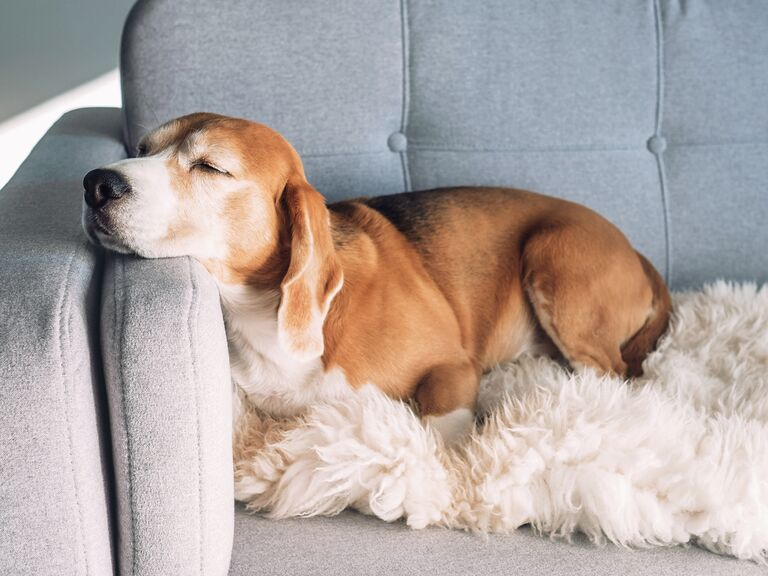 Wedding Registry Gifts for Your Dog