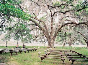 500-Year-Old Oak Ceremony Backdrop