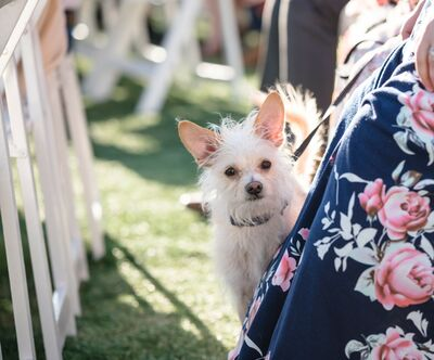 Wedding Tails- PET HANDLER