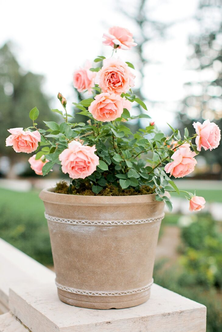 Flower pots of garden roses were placed on pillars surrounding the terrace, adding to the garden theme.