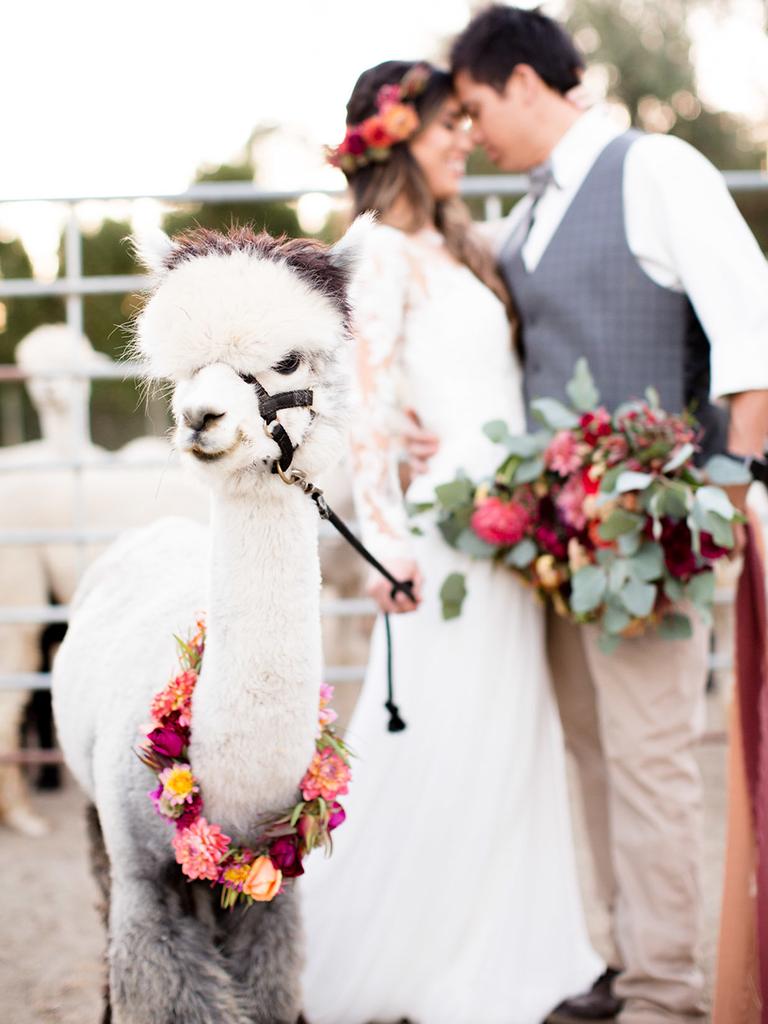 rustic wedding at alpaca farm