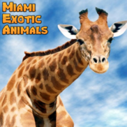 Miami, FL Animals For Parties | Miami Exotic Animals  &  A Hot Party