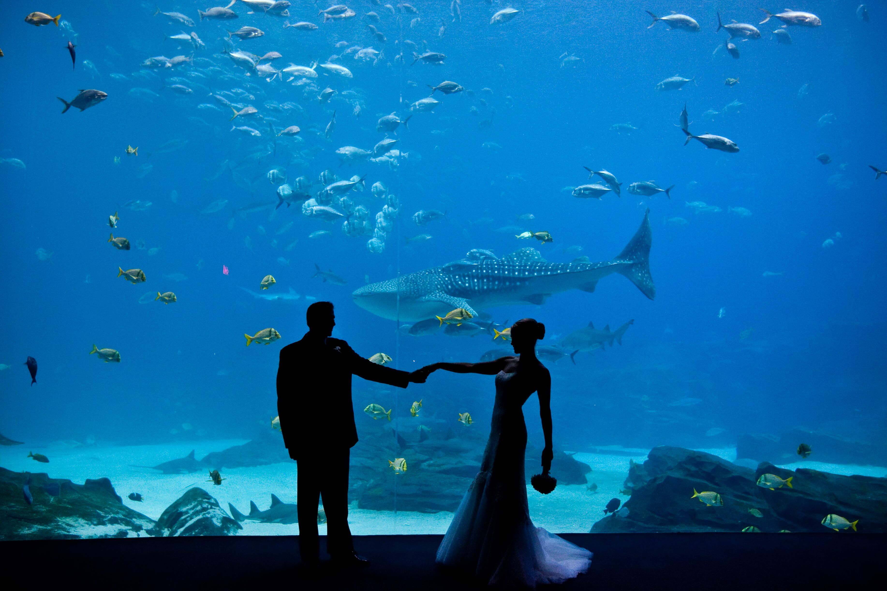 Georgia Aquarium Featuring Wolfgang Puck Catering Reception Venues Atlanta Ga
