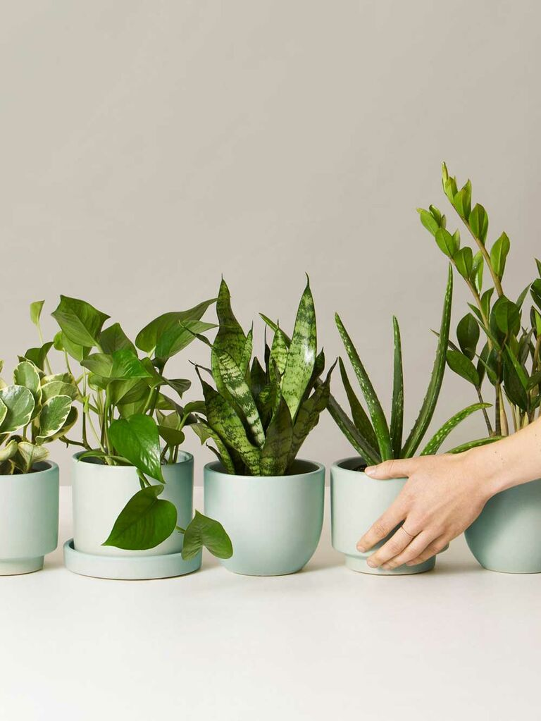 The Still monthly plant subscription service