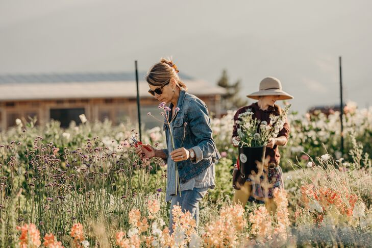 Harvesting Wildflowers in Montana