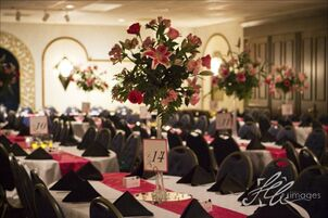 Wedding reception venues in columbia il the knot royale orleans junglespirit Choice Image