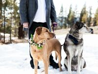 Wedding dogs with flower crown collars