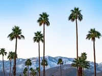 palm springs bachelor party