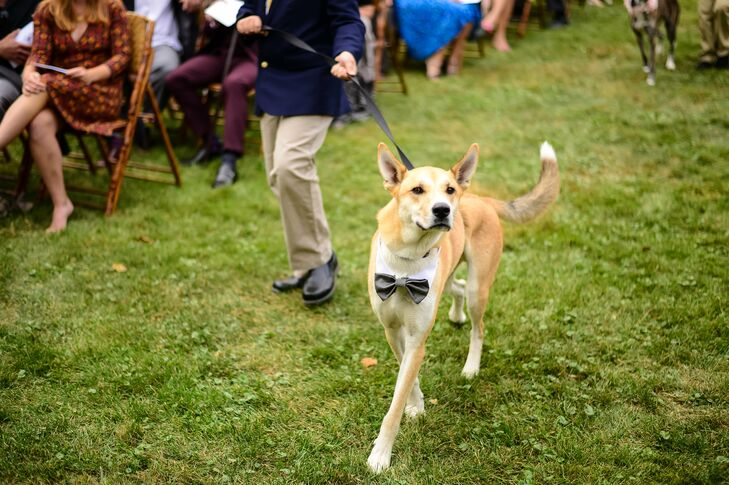 Dog Ring Bearer with Bow Tie Collar